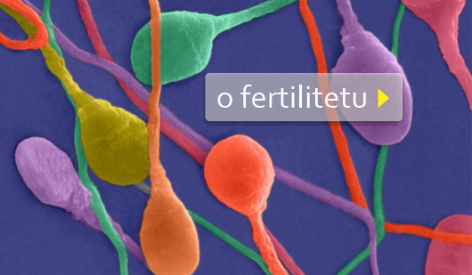 proxeed plus fertilitet i muška plodnost